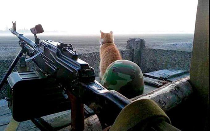 Росія ображає котиків: мережу розбурхало зворушливе фото з Донбасу