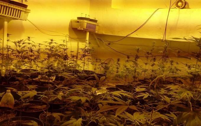 Кива нашел в психбольнице Луцка целую плантацию конопли: опубликованы фото