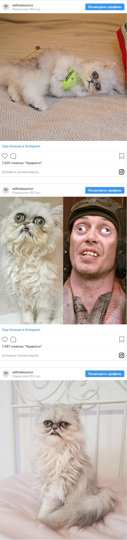 """Сеть испугали фото """"самого страшного"""" кота на планете (1)"""