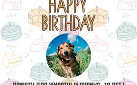 Привітай хвостиків: найбільший притулок для тварин в Україні святкує день народження