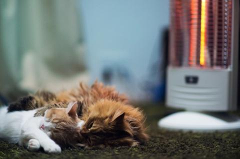 Котенок Ханна - подруга Дейзи (12 фото) (5)