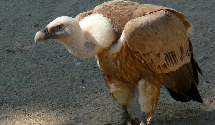 В Ливане обвинили птицу в шпионаже