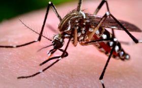 Ученые нашли новые виды комаров, которые не пьют кровь