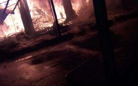 На популярном курорте Украины произошел крупный пожар: опубликованы фото и видео