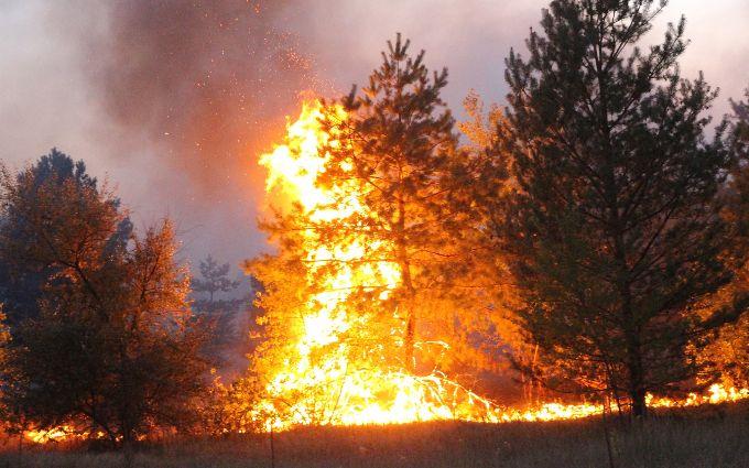 Намеренный поджог - штаб ООС шокировал новостями о сокрушительных пожарах