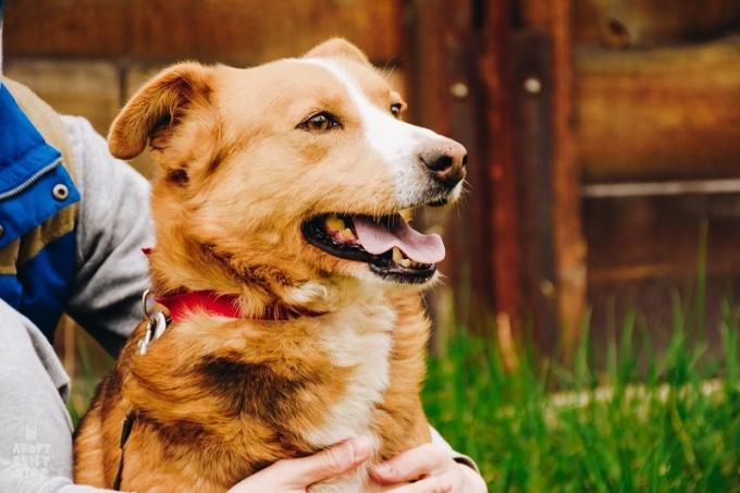 Найди друга: необыкновенные собаки ждут любящих хозяев (5)