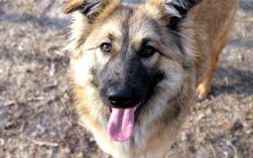 Найди друга: очаровательные собаки с нетерпением ждут своих новых хозяев
