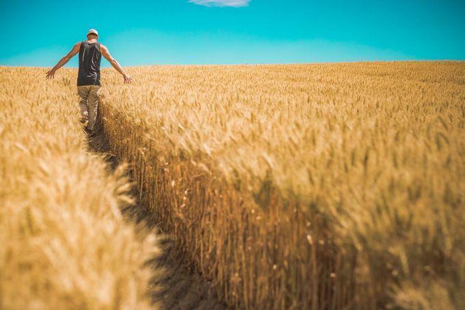 Україна різко збільшила експорт агропродукції в ЄС