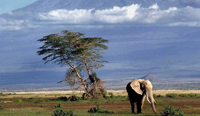 Детские визы в Кении отменены