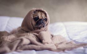 Продай собаку за комуналку: Нафтогаз відреагував на скандальну заяву депутата
