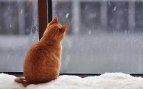 Мокрый снег и гололед: синоптики сделали прогноз погоды на начало недели