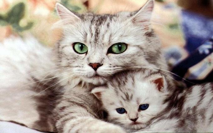 Украинцы создадут революционное устройство для понимания котов: опубликовано видео