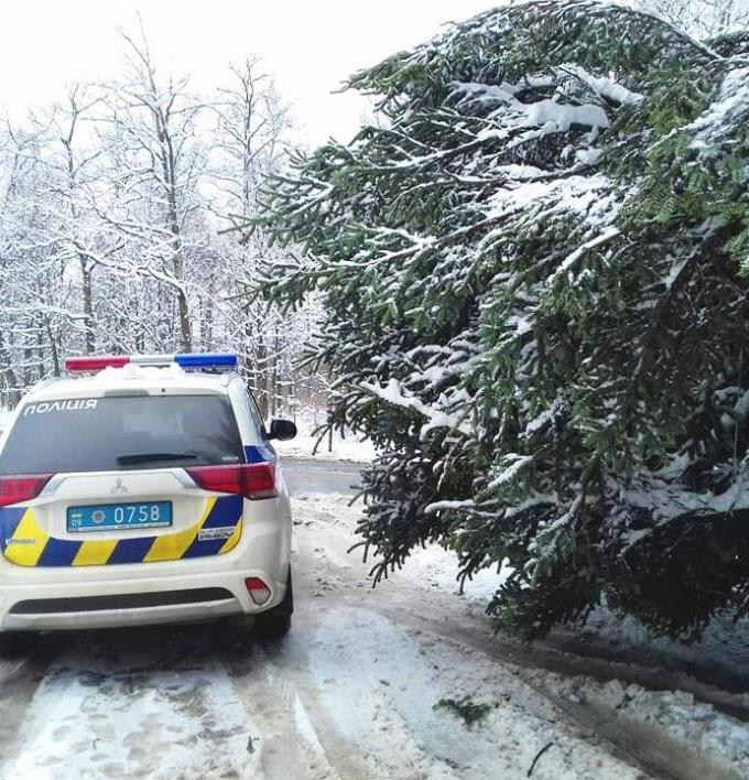 Главная елка страны уже едет в Киев: опубликованы фото (1)