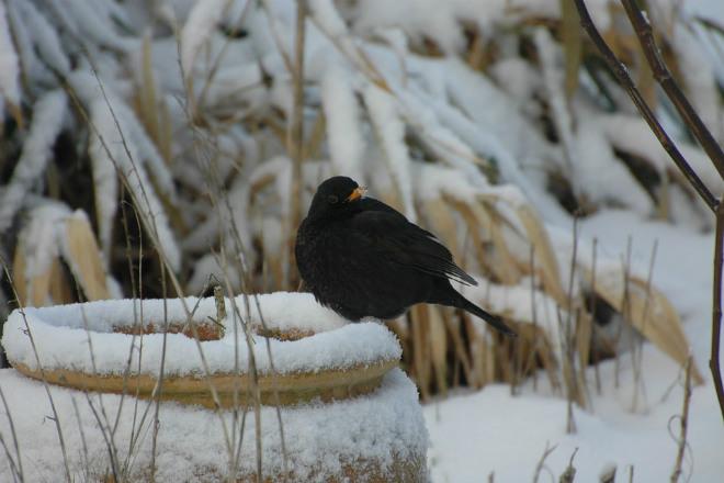 Погода на сьогодні: в Україні очікується сніг, температура від -9 до +6