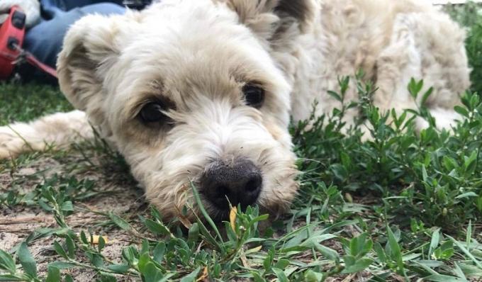 Найди друга: очаровательные собачки мечтают про уютный дом (6)