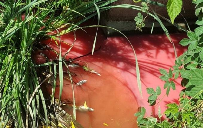 Під Києвом річка стала червоною від хімікатів: з'явилися фото