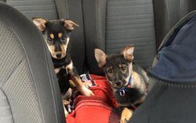 Очаровательные щенки ищут семью: в Киеве продолжается самый добрый проект для животных