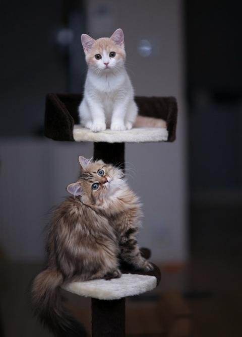 Котенок Ханна - подруга Дейзи (12 фото) (9)