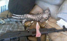 Котики на защите Украины: сеть умилили фото из зоны АТО