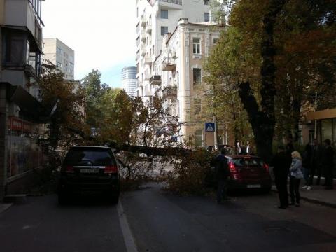 У центрі Києва величезне дерево звалилося на машини (4 фото) (3)