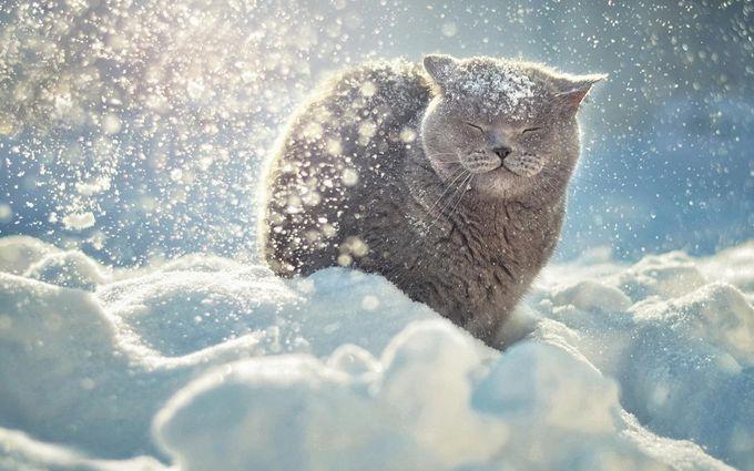 Сніговий апокаліпсис в Україні: названі області, які замете снігом