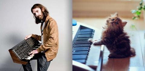 Коты как мужчины (21 фото) (2)
