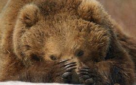 В Белой Церкви в цирке медведь напал на зрителей: появилось видео