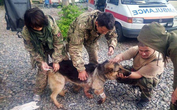 Случай с собакой, которая защитила бойцов АТО от обстрела на Донбассе, взбудоражил сеть