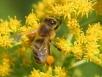 Подкормка пчел зимой идругое