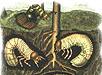 Как бороться сличинками майского жука?