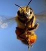 Технология содержания пчёл
