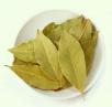 Лавровый лист выращивание