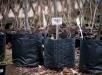 Приобретение ихранение саженцев плодовых деревьев