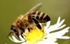 Пчеловод делится опытом (3часть)