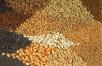 Готовим семена квесеннему посеву
