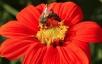 Зимовка молодых пчёл