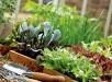 Высадка рассады овощных культур