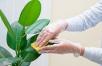 Очистка растений