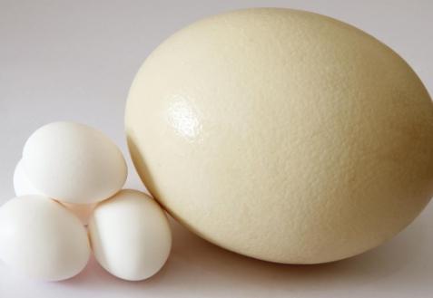 Яйцо страусиное