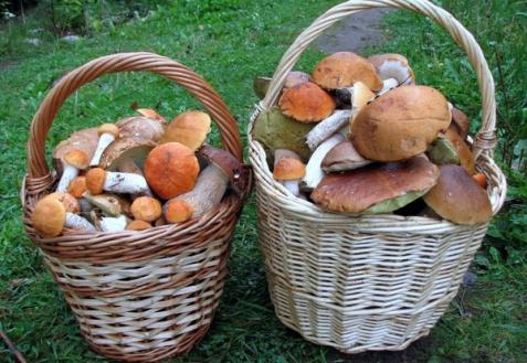 Как использовать грибы