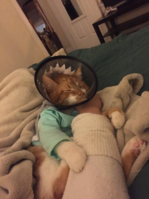 Коту приходится накладывать многочисленные мази.