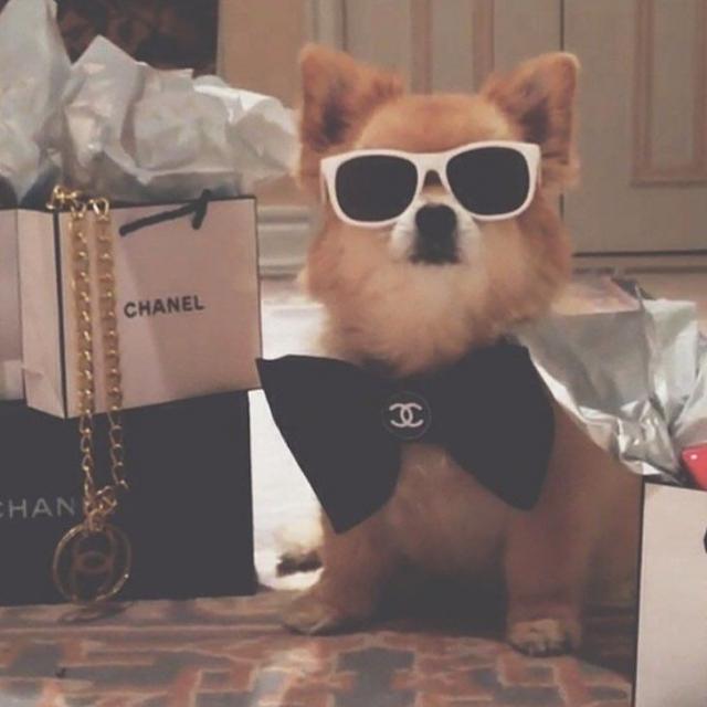"""Результат пошуку зображень за запитом """"Богатые собаки из Лондона живут лучше, чем большая часть населения Земли (14 фото)"""""""