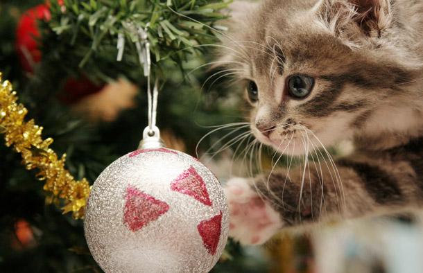 """Новогодняя картинка """"Котенок и елочная игрушка"""""""