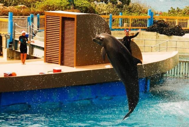 Кекаимала - вольфин, который не только благополучно выступает и показывает представления, но и является многодетной матерью.