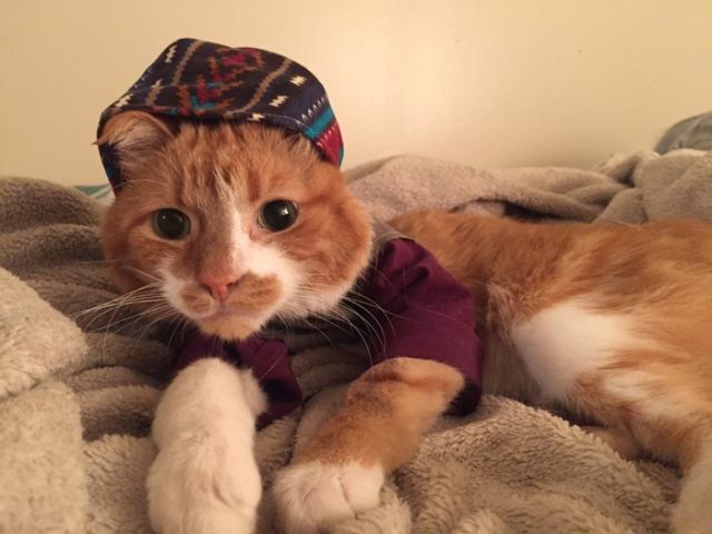 В пошитой одежде коту нравится больше, чем в медицинских бандажах.
