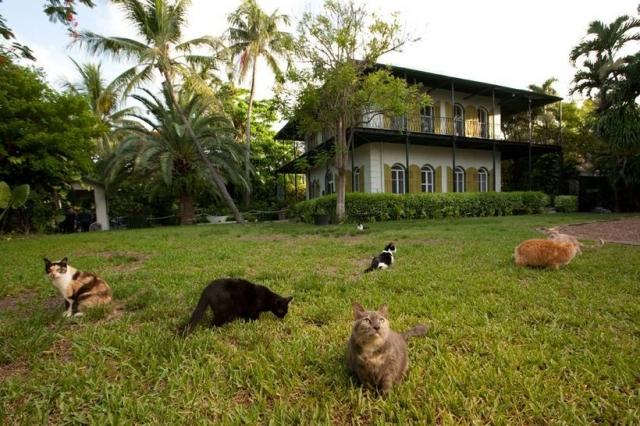 10 мест на планете, которые должны посетить все любители кошек