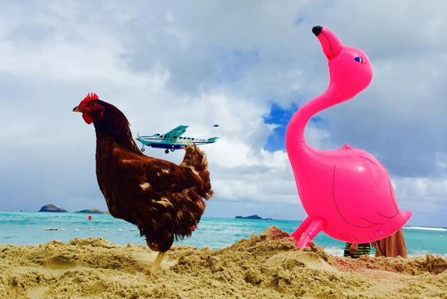 """Результат пошуку зображень за запитом """"Парень путешествует по свету с курицей! (10 фото)"""""""