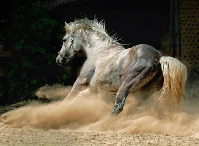 Грациозные лошади – живое воплощение стремительности, красоты и благородства.