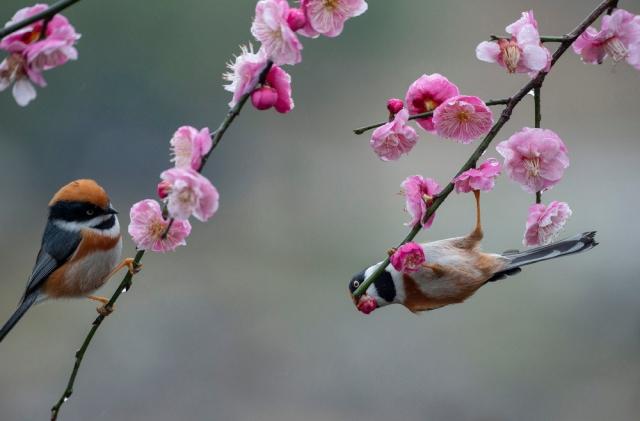 Результат пошуку зображень за запитом Интересные фотографии с птицами - фото.