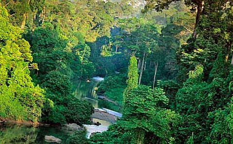 Тропический лес Суматра